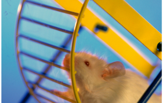 Wer will schon ins Hamsterrad?